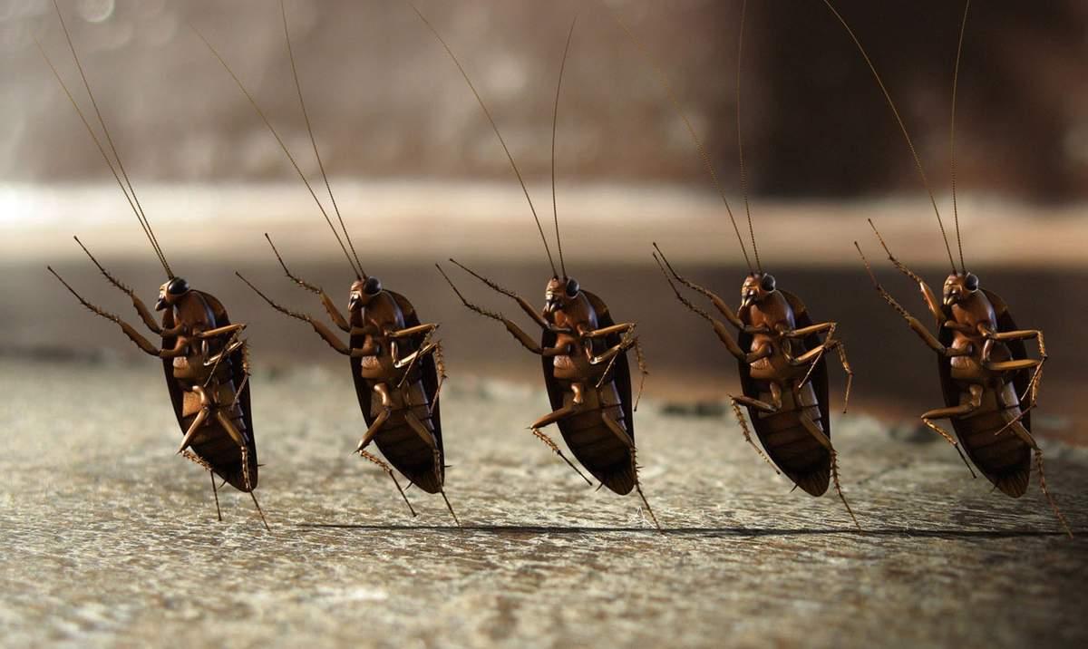 Самое эффективное средство от тараканов в домашних условиях